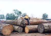 原木の品質確認風景
